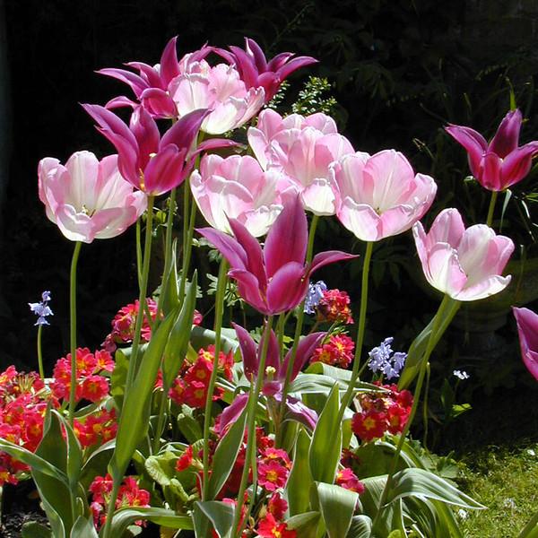 Garden's Glory 4 x 4 300 dpi 0800.jpg