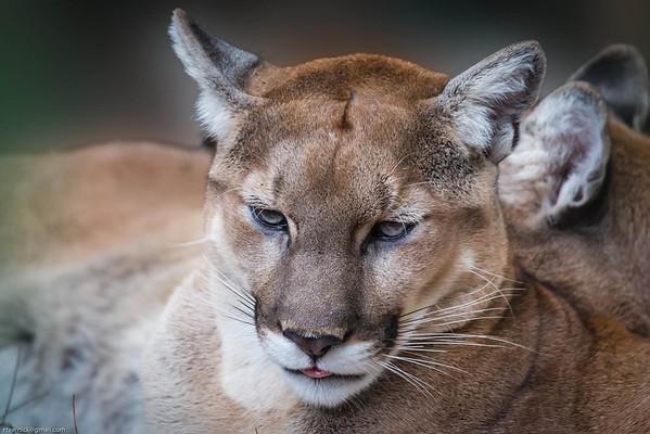 Carolinas WNC Wildlife