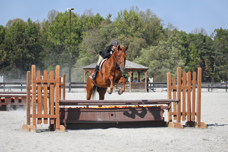 Ranson photography provides the Richmond, Virginia area with showjumping photography.  This sort of photo can be a great present or even used to sell the horse.  You can also book Ranson Photography to do a private session at your home barn in order to get the exact photos you need.