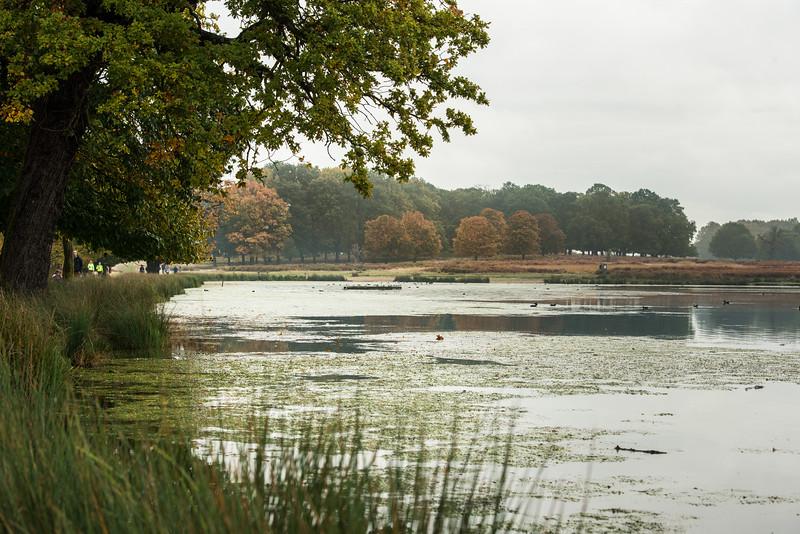 Richmond Park -9716.jpg