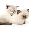 Two cute kittens sleeping