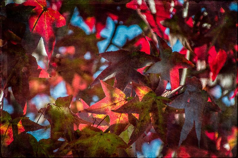 October 28 - Fall colors in Los Angeles.jpg