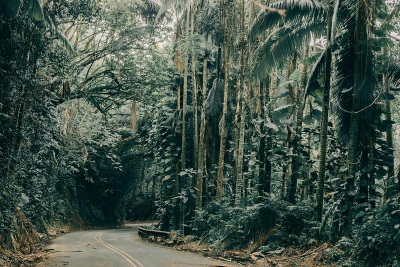 Hawaii20-369.jpg