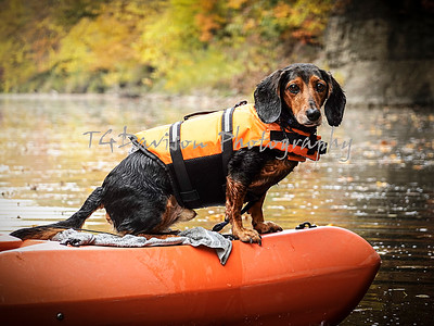 Kayaking w/ George the Wonder Dog Illinois River 10/10/2020