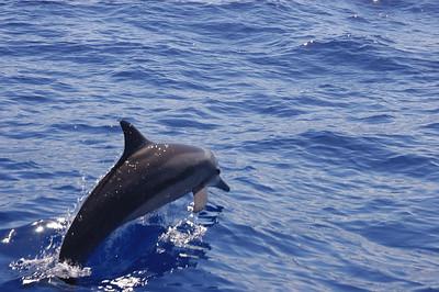 2005.10.13 Moorea Dolphins