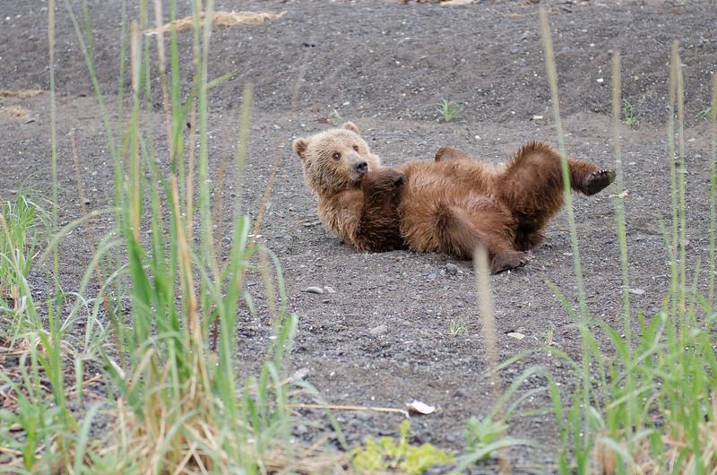 Alaska-8323.jpg