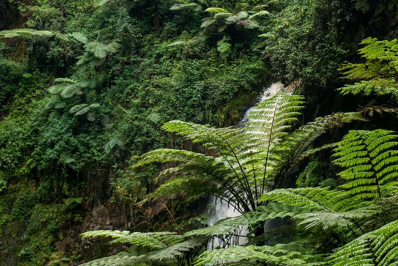 Nyugwe-Rwanda-38.jpg