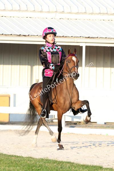 Class 12: Road Pony Under Saddle