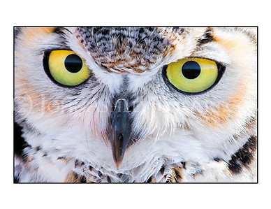 """Owl Eyes"" note card"