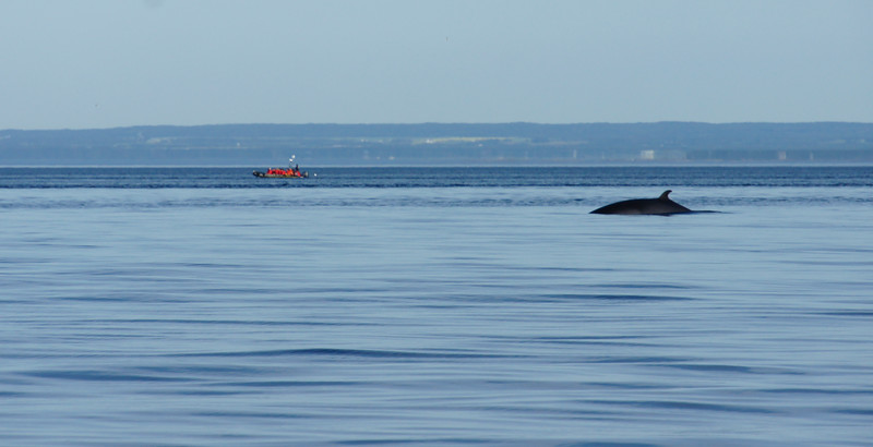 2011 quebec whale watching (2 of 80).jpg