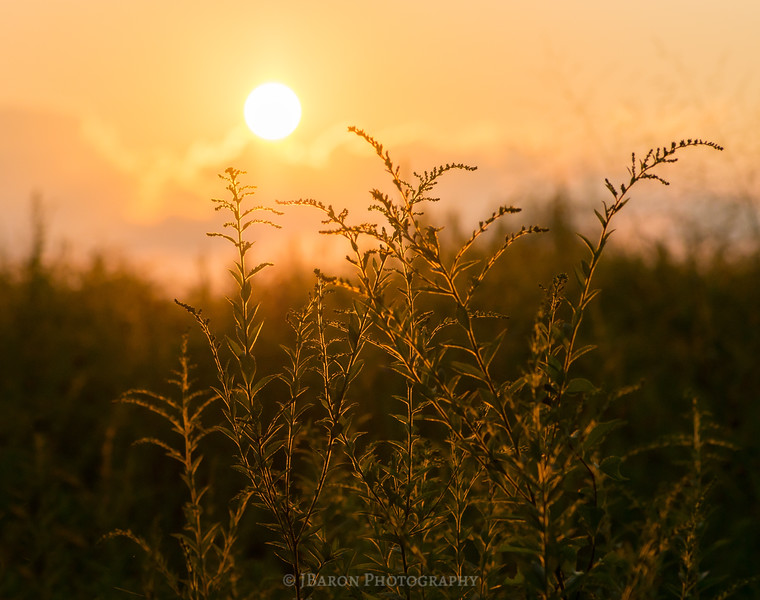 Sunset over a Field of Goldenrod