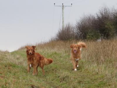 Dogs Xmas 2013