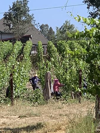 Small Vines