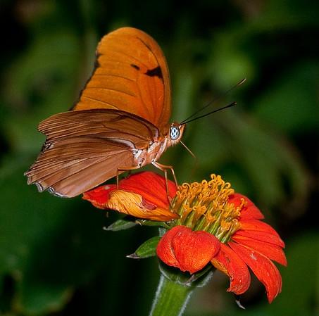 Butterfly World - Sept 25, 2009