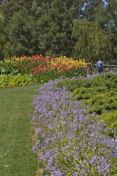 20080103_1258 Blue Lotus Water Garden