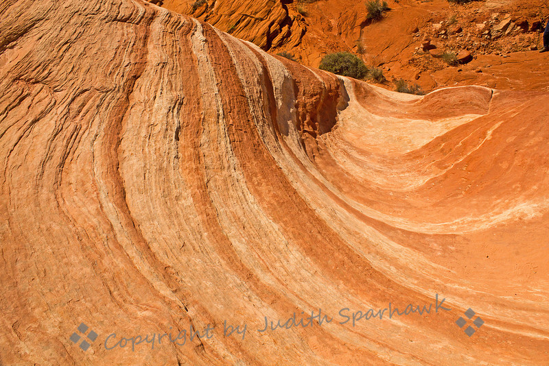 Fire Wave ~ This formation is called the Fire Wave, and is reached by hiking a circuitous route from the main road, up and down hillsides, over sandstone, through wildflowers, and over deep sandy trails.  Thank heavens for the trail posts at intervals along the way, or I never would have found it!  Valley of Fire, Nevada.