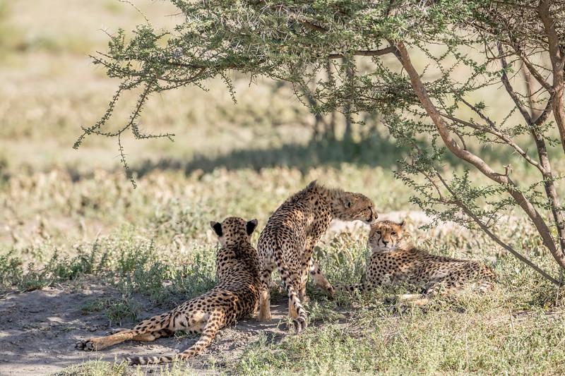 Tanzania_Feb_2018-55.jpg