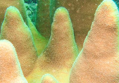 Dive/Puerto Rico - Feb., 2013