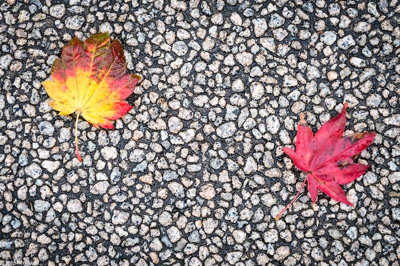 HOKKAIDO. The leaves are turning.