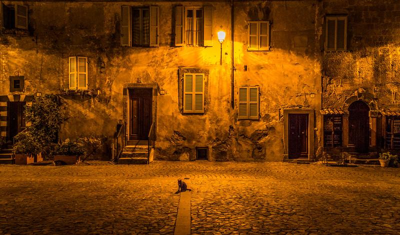 Cat at Midnight