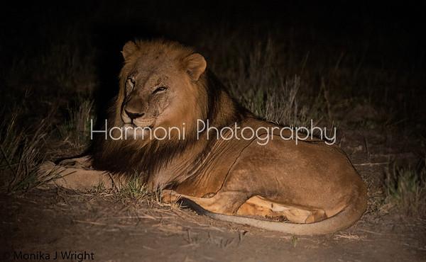 Botswana and S.Africa 2016 - Harmoni Photography