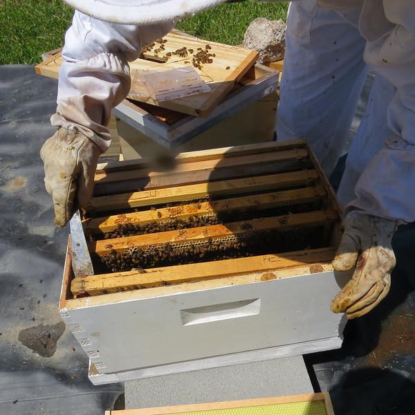 work bees.JPG