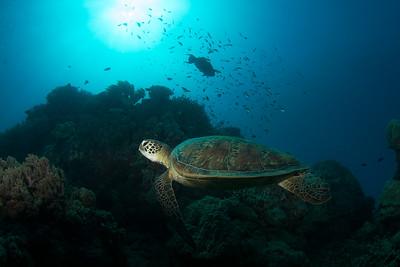Cairns Reefs
