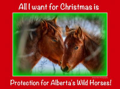 12 2013 Dec 16 Sandie's Xmas Card Alberta Wild Horses*^