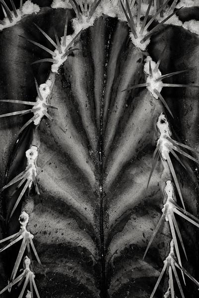 cactus-striations.jpg