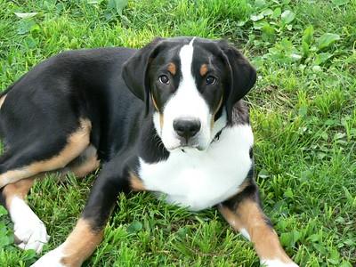 Brewster, 3 to 4 Months