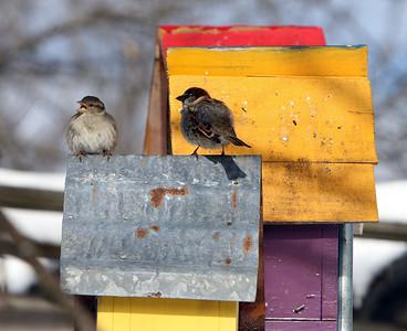 Front yard birdhouses 020521