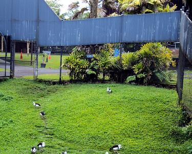 Hilo Zoo 2012