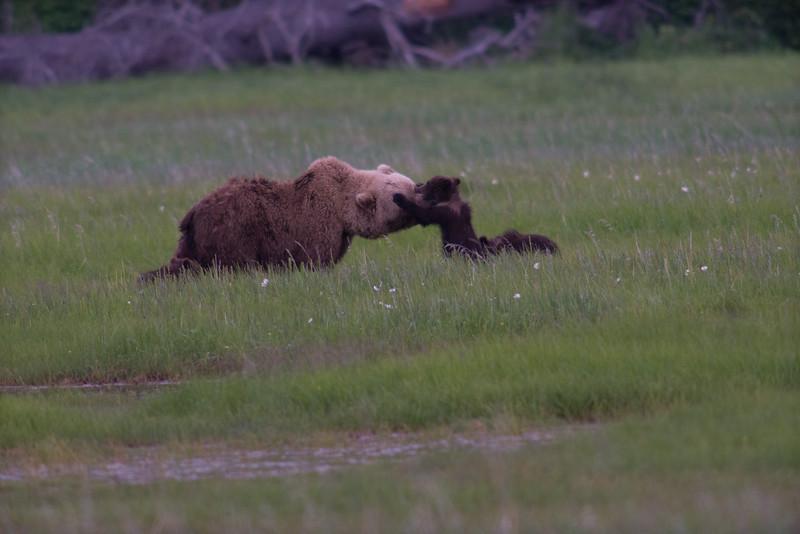 Alaska-6536.jpg