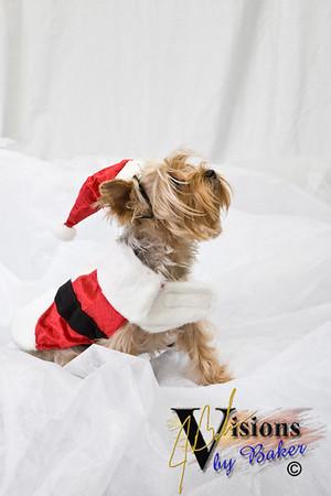 Chloe for Christmas 2007