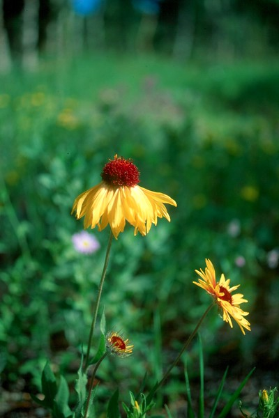 amh FLOWERS (1226).jpg