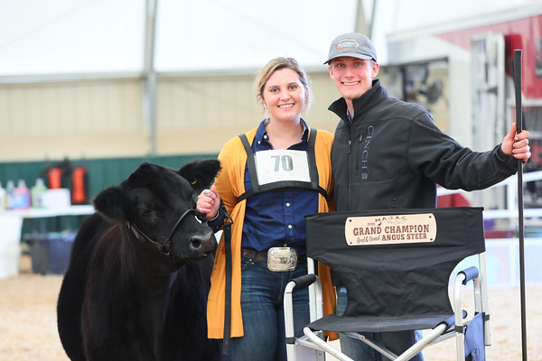 Bred And Owned Angus Steer Ring Shots