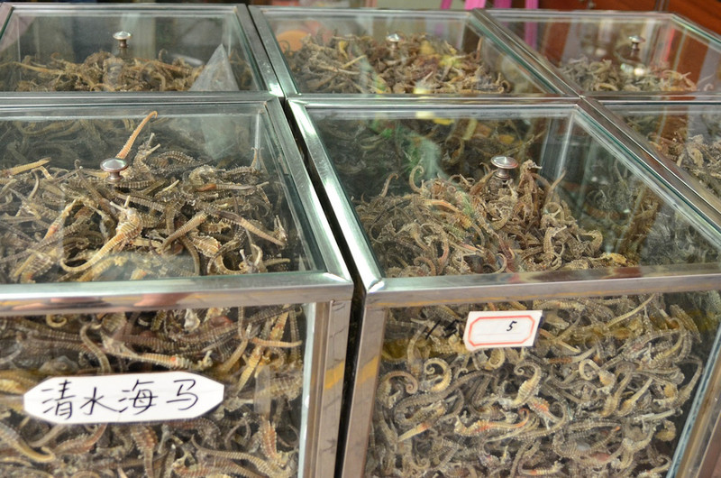 sea horses...dried.  But no SEA MONKEYS to be found anywhere....
