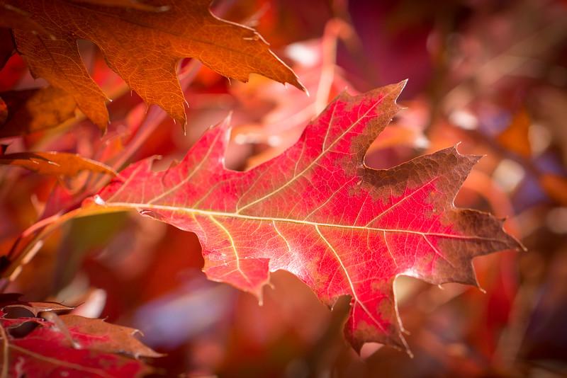 20151024-Fall Colors-85.jpg