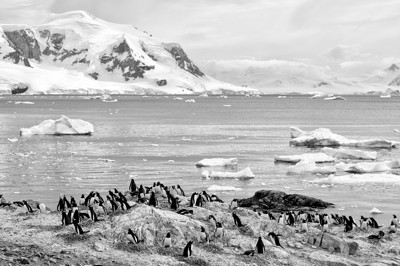 _MG_5623_20170120_Antarctica-Edit.jpg