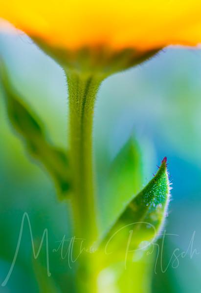 flowers_182.jpg