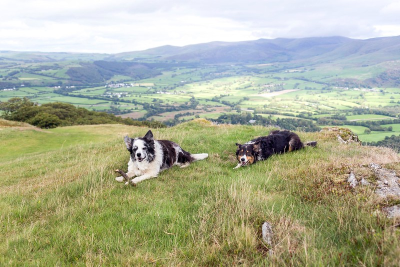 Fri 7th Sep : Sale Fell : Cassie and Bess
