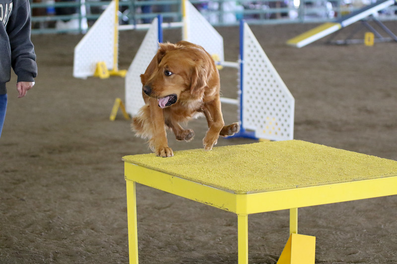 3-15-2015 Bloodhound-0611.jpg