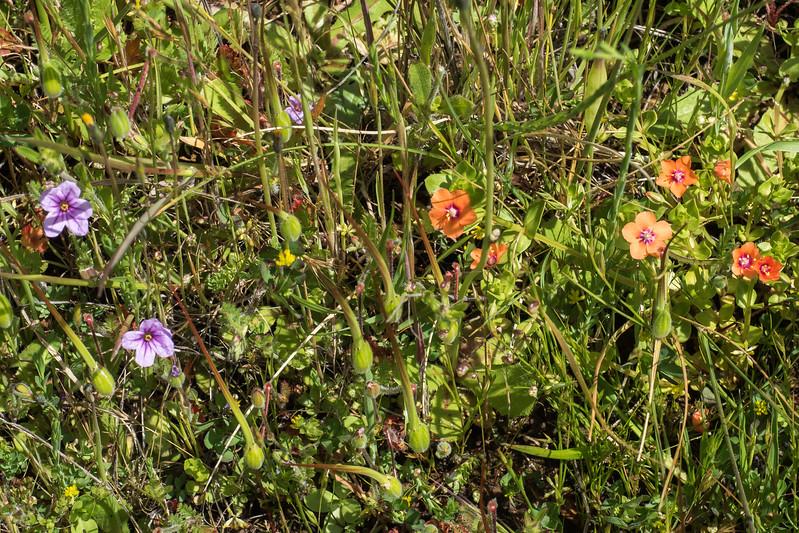 Edgewood_Park_wildflowers-11.jpg