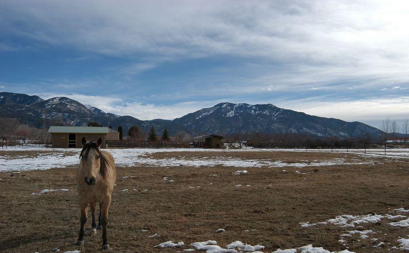 Sante Fe Horse.jpg