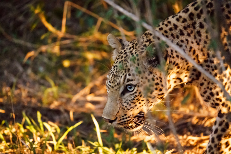 LeopardHills-20171022-0912.jpg