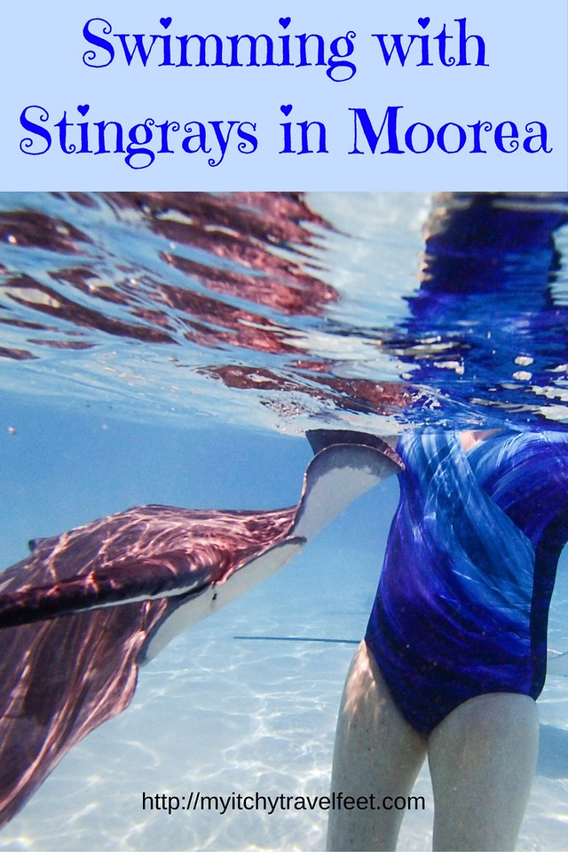 Swimming with Stingrays in Moorea is a fun boomer cruise excursion in the South Pacific. #cruise #SouthPacific