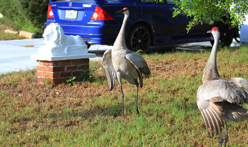 cranes-3-4-19_4822-cropped-twistd.JPG