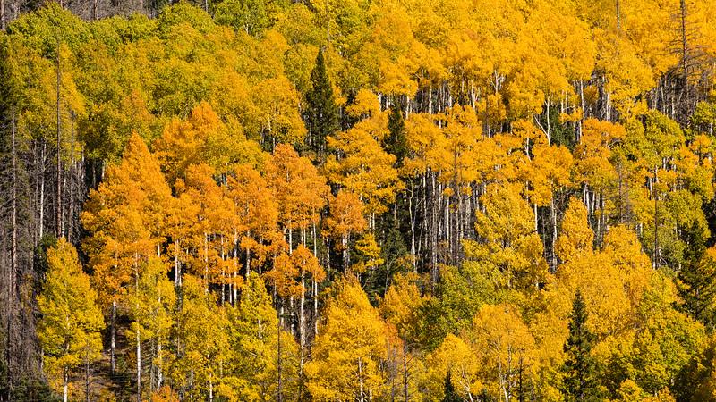 Colorado19_5D4-1556.jpg