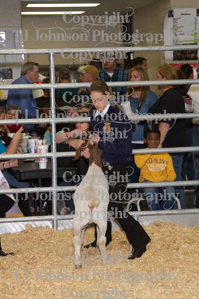 2013 Klein ISD Goat Show Class 5