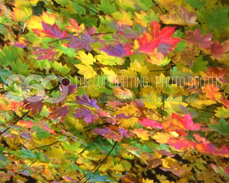 Autumn Leaves_batch_batch.jpg